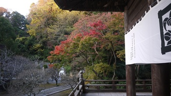 妙本寺 (2).jpg